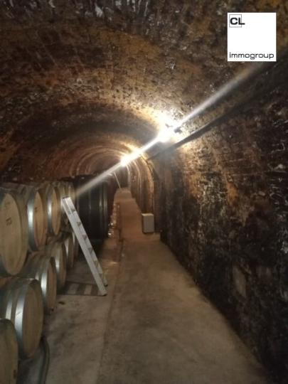 Traditional winery in the Kamptal - best wines with awards - family business