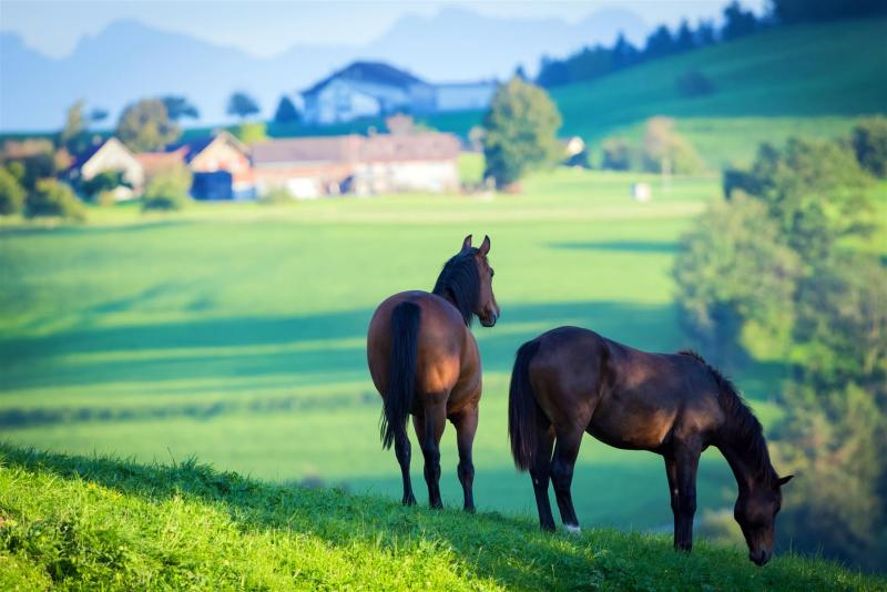 Riding stables in Lower Austria for sale